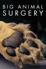 Big Animal Surgery